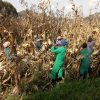 Climate Change: How Farmers Helping Farmers has helped our Kenyan partners cope with climate change